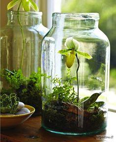 Le mini orchidee possono crescere perfettamente in un grande vaso tipo quelle delle olive, servirà un buon fondo di corteccia e muschio e pochissime annaffiature. Read more at http://www.eticamente.net/38012/riciclare-vasi-di-vetro.html#jvx2LPDVFx53rJQg.99