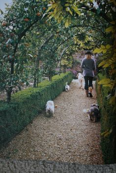 Boxwood hedges and trained fruit trees potentially for the garden entrance.