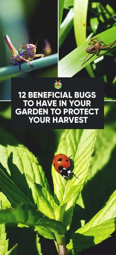12 Beneficial Bugs to Have in Your Garden to Protect Your Harvest