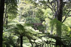 Mini Railway - Coromandel New Zealand, Mini, Places, Lugares
