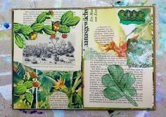 mano kellner, sketchbook urwald