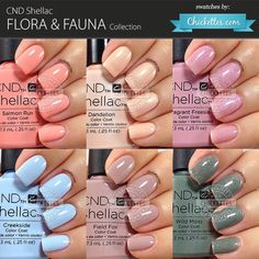 CND Shellac:  Flora & Fauna collection - swatch by Chickettes.com.