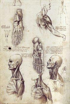 Leonardo Da Vinci anatomical sketches/drawings ca. 1485-1515