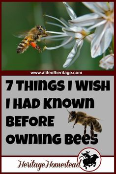 "7 things to consider and two things you need adequate of before owning bees. Here is the ""class schedule"" of what you can expect to learn in the first years"