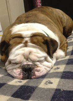 Too many wrinkles to count!