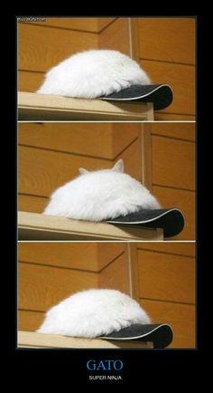 GATO - SUPER NINJA #gato #buenisimo #chistoso