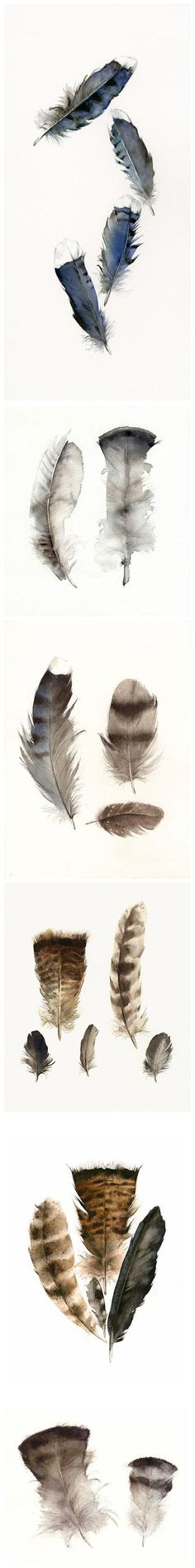 Watercolor pencil feather practice