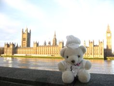 Bechamel Bear, currently at the Parliament of the United Kingdom.
