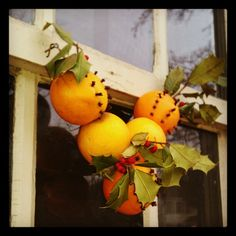 clove-studded oranges + holly strung on a window