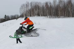 Collecting air miles Sled, Arctic, Cats, Collection, Lead Sled, Gatos, Cat, Kitty, Luge
