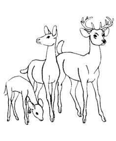 find this pin and more on coloring 3 deer family coloring page free printable wild animal - Printable Animal Colouring Pages