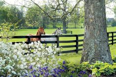 The South's Best Girlfriend Getaways: Gainesway Farm in Lexington, KY