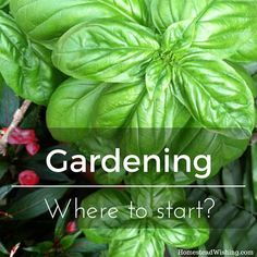 There is a lot you need to know before starting a garden.I compiled a list of 40 reads from homesteaders. Learning is the best place to start!