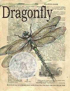 Druck: Dragonfly Mischtechnik Zeichnung von 1890, verzweifelt, Wörterbuch-Seite