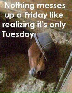 NOTHING MESSES UP A FRIDAY LIKE REALIZING IT'S ONLY TUESDAY or Wednesday or Thursday... or Monday!
