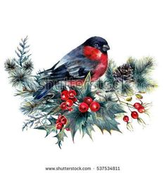 Watercolor Illustration of Bullfinch Sitting on Fir Branch Decorated with Holly Berry and Hawthorn. Robin Bird Wildlife Scene Isolated on White. Hirsch Illustration, Bird Illustration, Christmas Illustration, Watercolor Illustration, Christmas Images, Christmas Art, Vintage Christmas, Xmas Wallpaper, Xmas Cross Stitch