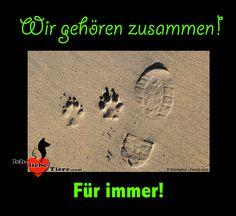 Wir gehören für immer zusammen! >> http://www.ich-liebe-tiere.com/ <<