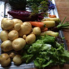 Samler sammen til aftensmad - kom lige til at glemme at vi kun er to idag #vibliverhvadvispiser #madforhjertet #udnytterhaven #lovecooking #salat #kartofler #gulerødder #rødbede #squash #dildskærme #hjulkrone