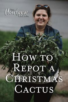flower garden care How to repot a Christmas Cactus. How to repot a Christmas Cactus. Christmas Cactus Plant, Easter Cactus, Christmas Garden, Propagating Cactus, Christmas Houses, Easy Garden, Lawn And Garden, Garden Ideas, Gardens