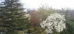 Ook de beuren kunnen van onze voorjaars tuin genieten.
