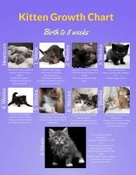 Pin By Cat Lover On Cat Development Stages Kitten Growth Chart Newborn Kittens Cats