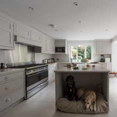 Modern Kitchen Design Large grey kitchen with island and dog bed - Beautiful! Kitchen Island Decor, Modern Kitchen Island, Home Decor Kitchen, Kitchen Interior, New Kitchen, Kitchen Ideas, Kitchen Cabinets, Kitchen Grey, Grey Cabinets