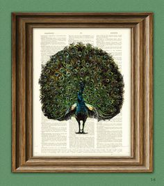 Peacock Art Print bird illustration beautifully upcycled dictionary page book art print 3