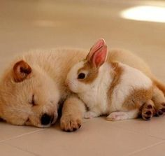 the adorable animals