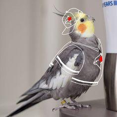 He's a #jays fan and he just can't hide it. #cockatiel @bluejays #bluejays #toronto #bird #torontobluejays #baseball #cutebird #birdlife #birdstagram #instagood #cute #birdoftheday #redcheeks #birdphoto #canada #alcs