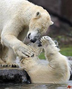 .polar kisses.