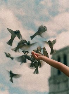 Birds are gliding in the wind without any fear