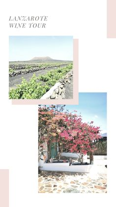 Lanzarote is one of Spain's most beautiful islands. It's full of sandy beaches & picturesque scenery make it a popular spot for tourists. As part of the Canary Islands Lanzarote gets year round sunshine and rarely sees rain. This climate means growing grape vines is a popular industry on the island. Lanzarote is also a unique volcanic landscape which gives the wine produced here a distinctive characteristic. If you're travelling here taking a wine tour is a great way to learn about the… Grapevine Growing, Find Instagram, Canary Islands, Travel Aesthetic, Sandy Beaches, Beautiful Islands, Grape Vines, Wonders Of The World, Adventure Travel