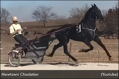 Within a span of seven months, a Standardbred racehorse has gone from being claimed for $15,000 to being sold at public auction for $300,000. Harness Racing, Racehorse, Horses For Sale, Has Gone, Horse Racing, Auction, Marvel, Public, Animals