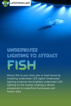 Lifeform LED offers a complete range of extremely bright underwater LED boat lighting products and easy to install LED dock light kits. Our underwater lights are durable, bright, and very efficient! Lake Dock, Boat Dock, Pontoon Boat, Underwater Led Lights, Dock Lighting, Boating Holidays, Boat Lights, Boat Insurance, Lakefront Property