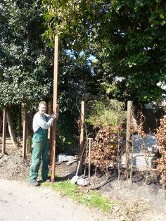 Op deze foto is goed te zien hoe lang de paal is en hoever hij dus de grond in moet om een beetje stabiel te staan. www.houdijkstijltuinen.nl