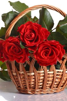 red roses only, please... ~~ X ღɱɧღ ||