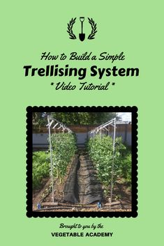 """Learn how to build a garden trellising system that actually works.  This vegetable trellis is lightweight, strong, long lasting, and easy to assemble with off-the-shelf parts.  We now use this design for all of our peas, cucumbers, tomatoes, and pole beans.  You can find all the details in our online Classroom.  Just type """"trellis"""" in the Classroom search bar and the post will pop right up for you. Online Classroom, Garden Trellis, Gardening Tips, Tomatoes, Shelf, Beans, Strong, Pop, Vegetables"""