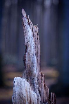 'Geisterwald'+von+Angelika+Bentin+bei+artflakes.com+als+Poster+oder+Kunstdruck+$16.63