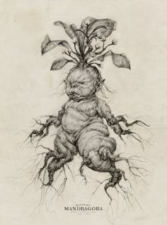 Hello Witches and Wizards! A little baby mandrake for you on the eve of Mr. Potter's birthday! I'm working sculpture version, and the drawing really helps inform some parts :) I am just so so excited to dress up and go to my local Barnes and Noble...