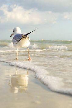 le sentiment de la mouette ⚓ photo by tina nord (seascape marine beach) Beautiful Birds, Animals Beautiful, Cute Animals, Animals Sea, Beautiful Images, Beautiful Beach, Sea And Ocean, Ocean Beach, Animals Tattoo