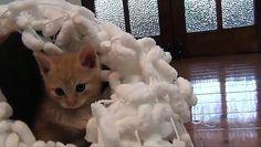 Pure Cuteness Kitenns Playing http://ift.tt/23nq4Tq
