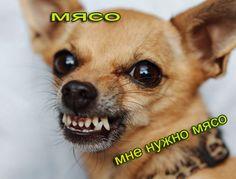 Опасные собаки ! Переходи по ссылке смотри и читай ! http://vnaturenovosti.blogspot.ru/2016/03/Opasnye-porody-sobak.html