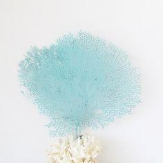 Natural Sea Fan Coral Light Turqoise Aqua by SandisShellscapes, $28.00