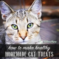 Healthy Pet Treats How to make healthy homemade cat treats Homemade Cat Treats Healthy Cat Treats, Healthy Pets, Pet Treats, Healthy Eating, Homemade Cat Food, Wellness Mama, Cat Health, Training Your Dog, Cat Breeds