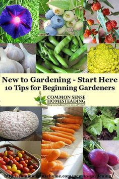 New to Gardening – Start Here – 10 Tips for Beginning Gardeners