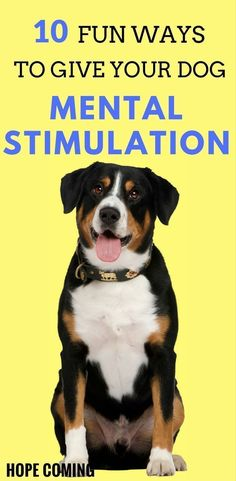 This clever man just solved everyones biggest pet problem with pvc mental stimulation is as important as physical stimulation dogs need a purpose or some work to do solutioingenieria Gallery