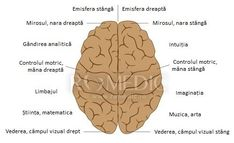 Click pentru a inchide imaginea, click si apasat pentru a muta fereastra. Poti utiliza tastele inainte si inapoi. Anatomy, Neurology