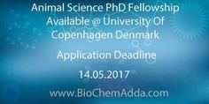 Animal Science PhD Fellowship Available @ University Of Copenhagen Denmark