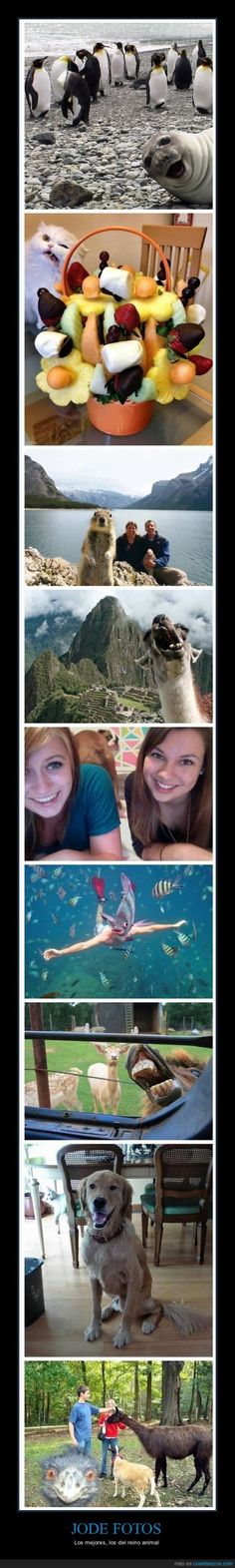 Animals make pictures funny too xD