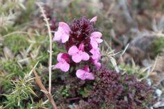 Anglesey, Flora, Coast, Album, Plants, Planters, Plant, Planting